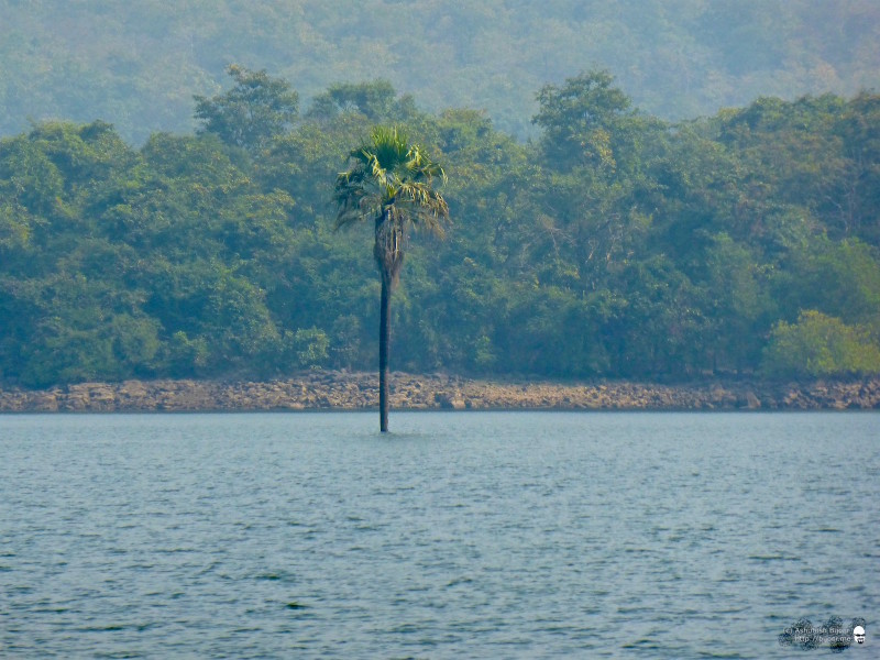 The water level must have risen recently, I surmised after seeing this palm tree emerge from the water